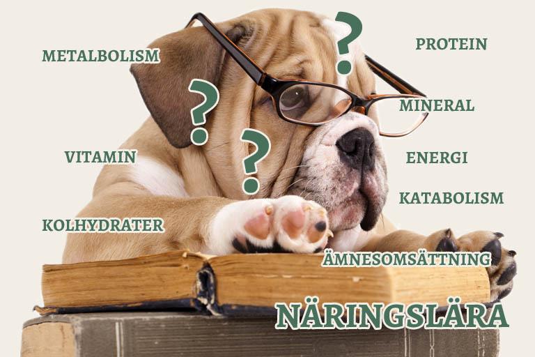 näringslära - hund