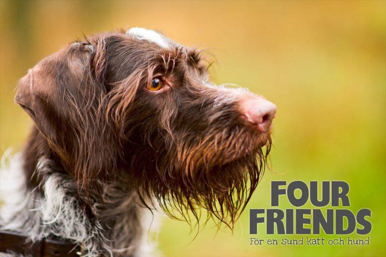 Fourfriends hundfoder
