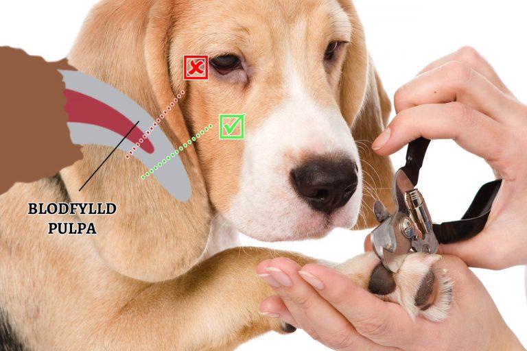 klippa klor på hunden
