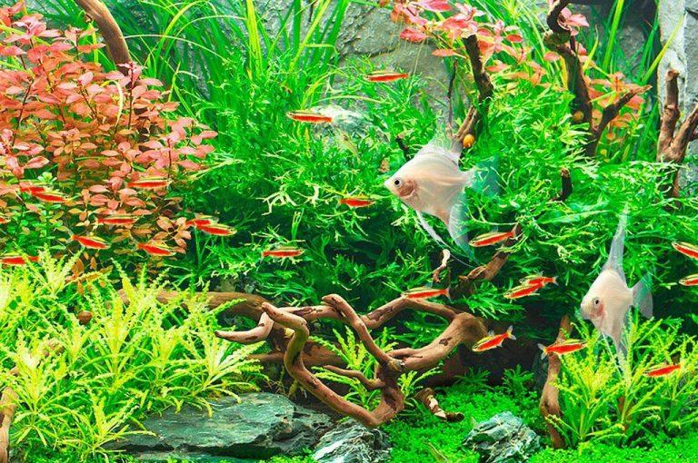 uppstart akvarium