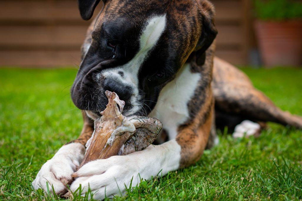 dog, boxer, pet-5439636.jpg