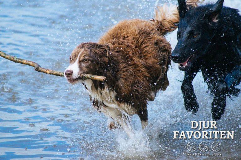 strikt hundägaransvar